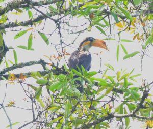 Khao yai nature life